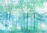 植物の光合成の歴史│人工光合成....